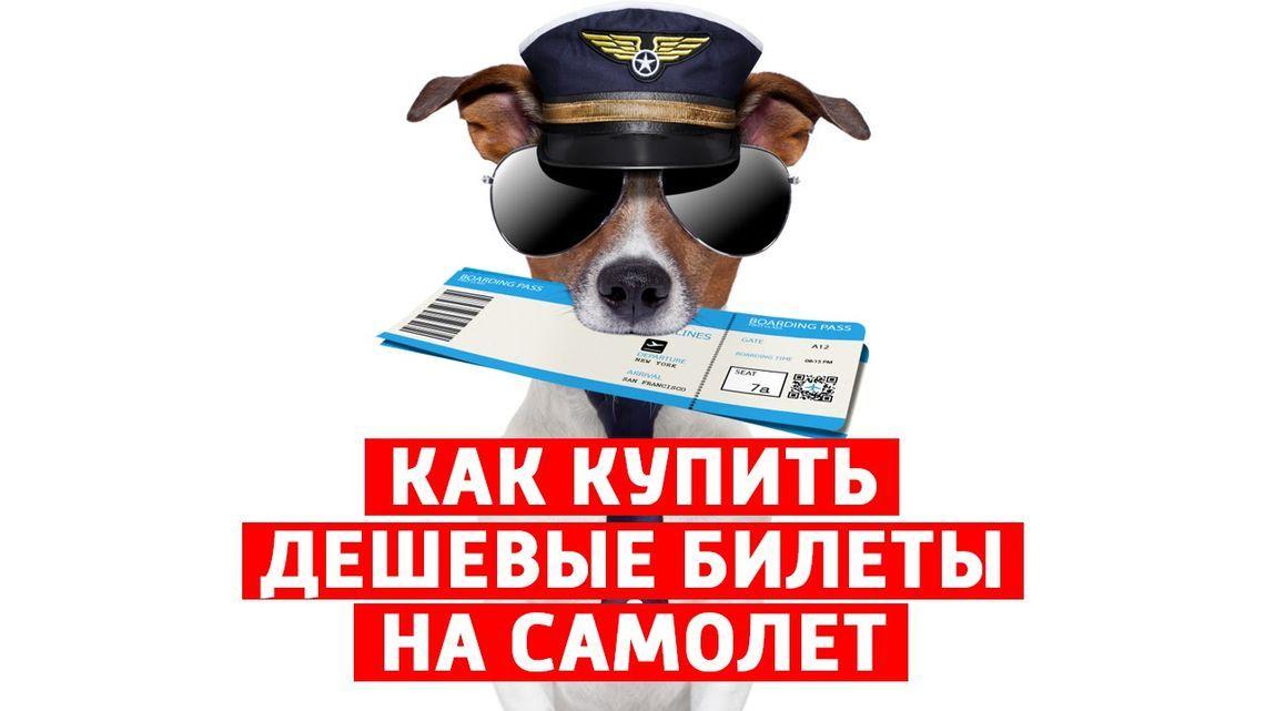 Купить авиабилет до петербурга по акции
