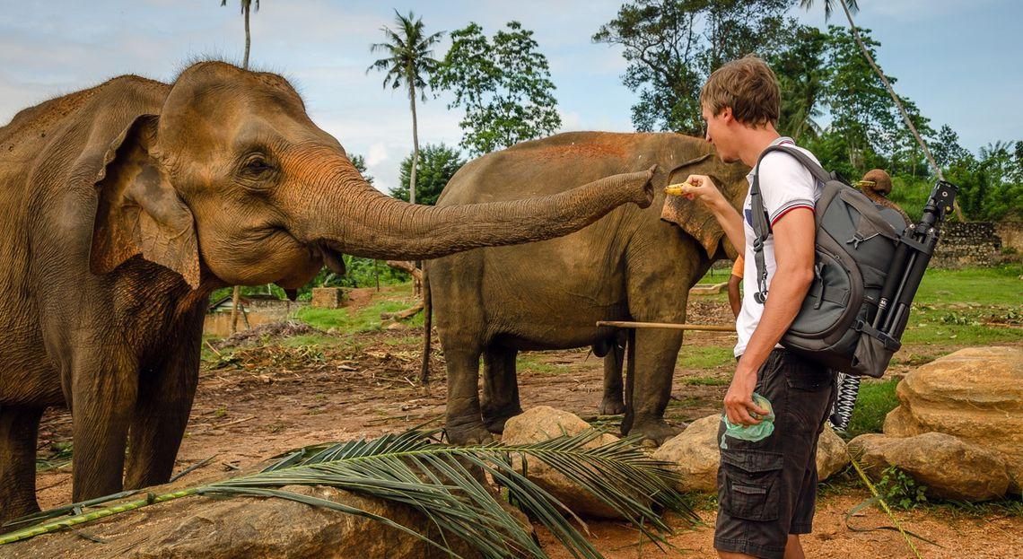 Картинки по запросу слоновий питомник ланка